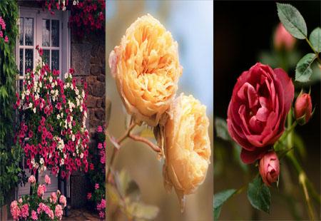 عکس های فوق العاده زیبا از گل ها برای پس زمینه ی موبایل
